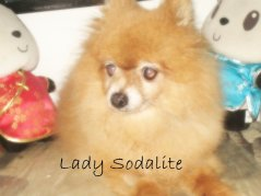 Lady Sodalite