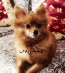 Lady Amber