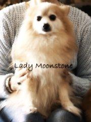 Lady Moonstone