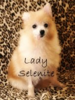 Lady Selenite