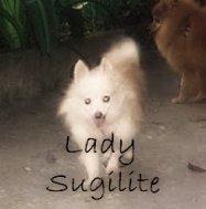 Lady Sugilite