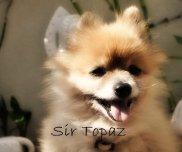 Sir Topaz