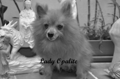 Memorial of Lady Opalite