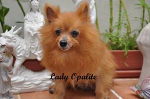 Lady Opalite