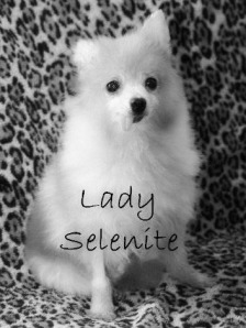 Memorial of Lady Selenite