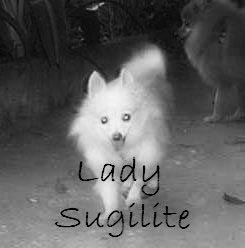 Memorial of Lady Sugilite