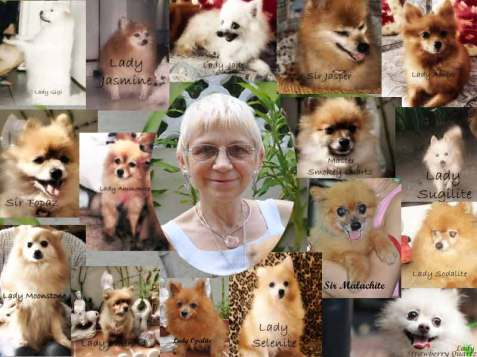 Me and My Rescued Aristocratic Pomeranians